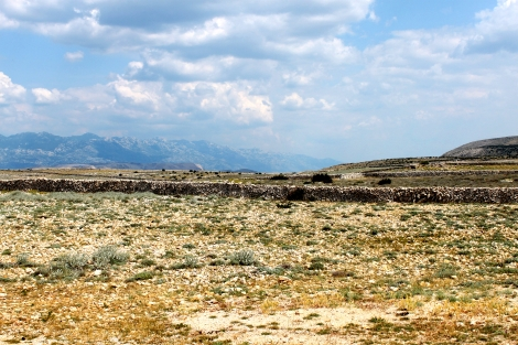 The pastures of Kolan, Island of Pag