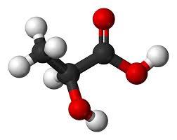 Lactic Acid Model